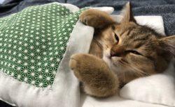 【w】寒すぎて‥布団から出たくない猫が話題に「たまらん」「添い寝したいw」