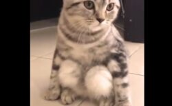 【w】独特の座り方をする猫が話題に「えー!」「体育座り?!」