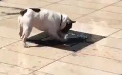 【爆笑】急に水が噴き出して・・犬のリアクションが話題にw