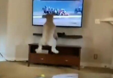 【爆笑】競馬番組にエキサイトする犬が話題に「足がすごいw」