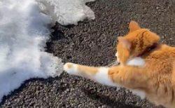 【動画】「そーっ」雪にびびりまくる猫が話題にw