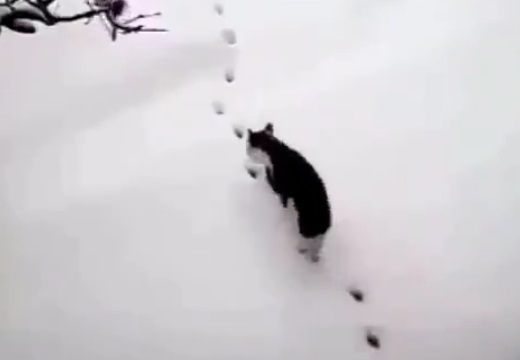 【天才!】雪に残った足跡の上を華麗に歩いて行く猫が話題に(・∀・)