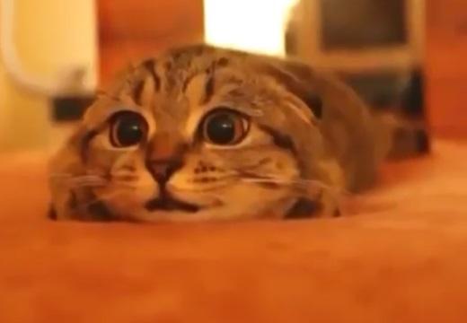 【最後w】真剣にホラー映画を見る猫が話題に「耳w」「目が!笑」
