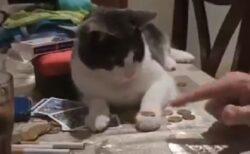 【コイン隠し】早業の説明を理解しやって見せる猫が話題に「すっごい」「賢い・・」
