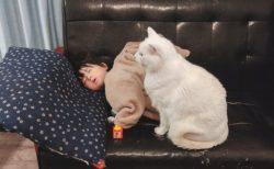 【けなげ】落ちないように‥ソファーで眠った子の傍でじっと動かない猫が話題に