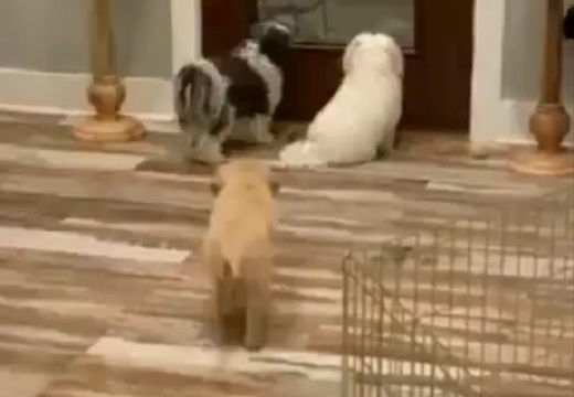 【爆笑】後ろからそーっと近づいて‥仲間を驚かす犬が話題にw
