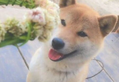 【4コマ】花の王冠をもらって喜ぶ犬、驚きの行動にw
