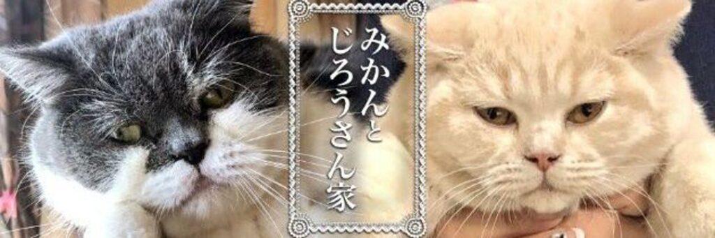 【w】こたつの中は猫がたくさん! ここは楽園、癒される