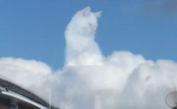 【w】雲の上から見下ろす猫 「カリン様だ」「神々しい。猫神様だあ~」