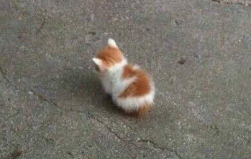 こんな子猫がいたらどうする・・・
