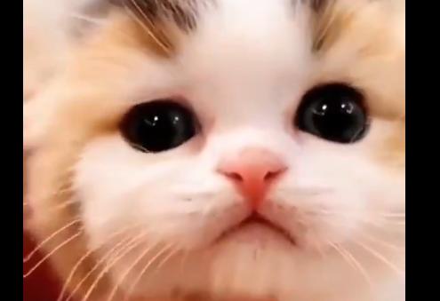 こんな可愛い子猫が寄ってきたらどうする・・・