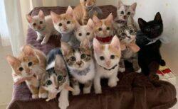 かわいい子猫の大群に見つめられたらどうする・・・