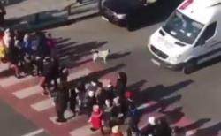 【動画】横断歩道を横断する子供たちを守るわんこが勇敢すぎる これには外国人も感涙