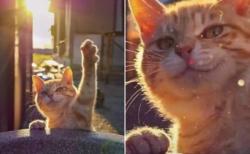 この猫ニキの表情 カッコよすぎるぜ!