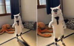 【w】二足歩行でこっちを見る猫、シュール可愛い