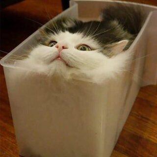 【w】猫は液体説 →やっぱり液体だった!