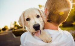 【w】ドジな犬の動画集:愛しすぎる犬達が話題に「だからイヌが好き!」