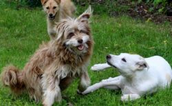【w】「犬は飼い主に見せるために犬同士で遊ぶ傾向」最新研究論文が話題に