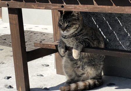 【ちょこん】ペンギンみたいに座ってキリっ!相当かわいい猫が話題にw