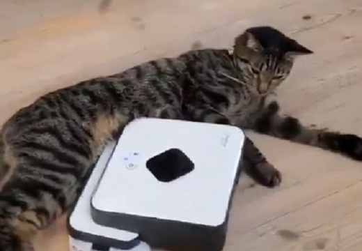 【w】ぜったいに動きたくない猫と容赦ない掃除機が話題に(・∀・)