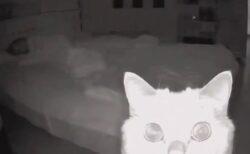 【猫w】寝てるとき防犯カメラを設置してみたら・・・