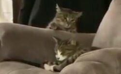 【しめしめ】寝込みを襲おうとしている猫!失敗したリアクションが可愛いすぎるw
