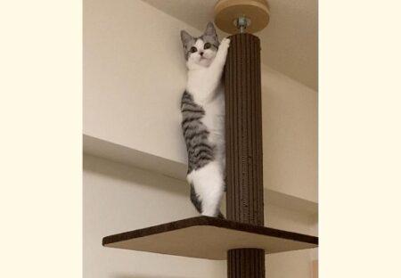【!】地震にびっくりした猫のリアクションに癒される人が多数「ごめん笑ったw」