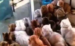 【圧】ベランダの鳩を凝視する猫集団が話題に「どういう状況!?w」