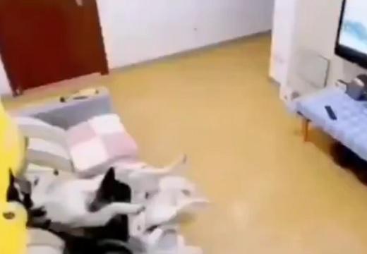 【!】留守番中の犬を録画してみたら‥慌ててテレビを切る様子がw
