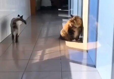 【ズザー!】猫のすごい突撃にネット騒然「まさかの下からw」「やられた子 戸惑ってるw」