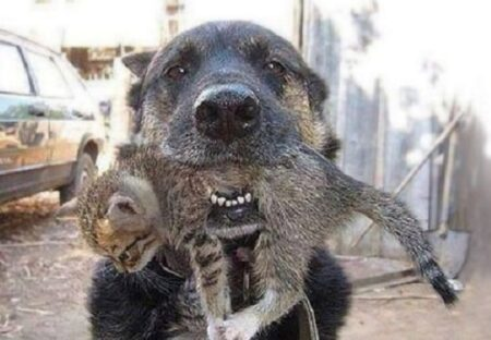 【家族愛】火事!家族と共に屋外へ避難した犬。炎の中に飛び込み子猫を咥えて戻る