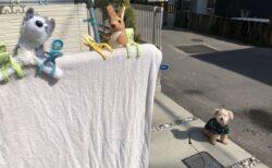 【表情w】洗濯されたお気に入りのぬいぐるみを見つめる犬が話題に