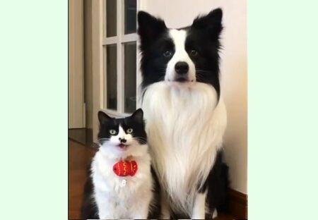 【動画】そっくりな犬と猫が話題にw「親子?!」