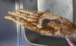 【閲覧注意】自然薯もらったんだけど・・衝撃的な形状にネット騒然「サルの手‥」