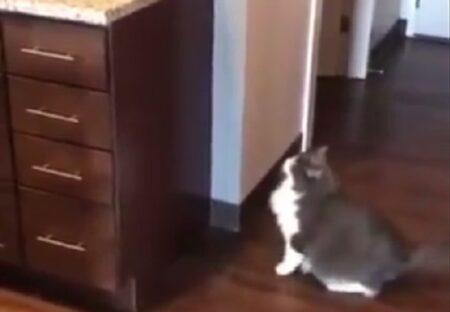【ぼてっ】ぽっちゃり猫さん。ジャンプ失敗し立ち去る様子が可愛いすぎるw