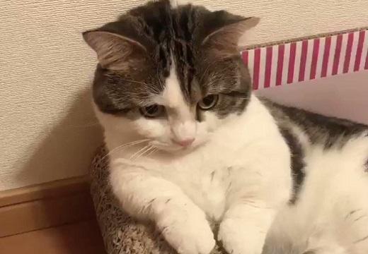 【はっ】我に返った猫のリアクションが話題にw