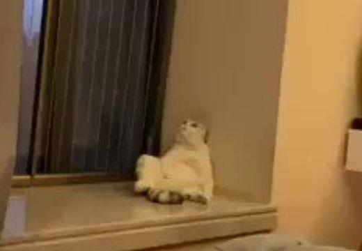 【爆笑】完全に思考放棄してる猫が激写され話題に「自分みたい・・・」