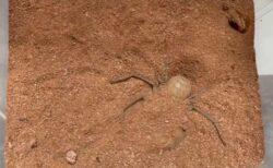 【え】クモが土に隠れる様子、思いがけず可愛くて話題に「クモが可愛いって初めてw」