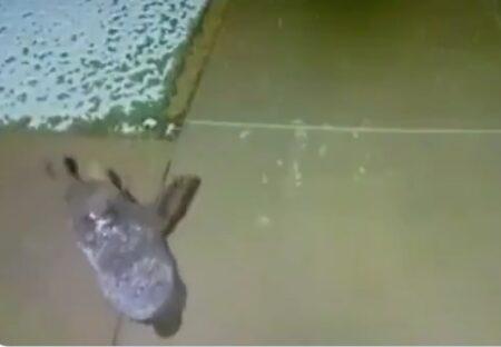 【・(ェ)・】雪に大喜びするクマの子供。防犯カメラが捉えた映像が絵本みたいな可愛さ