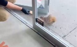 【ひゃー】店員さんにおやつをもらいに来るリスが話題に「行ってみたい!」