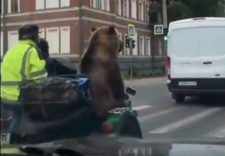 【本物】ロシアでドライブを楽しむクマが目撃される!全員楽しそうw