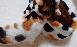【w】自分と同じ柄の鞄を見つけた三毛猫、驚きの行動に!「可愛いすぎる」