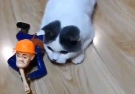 【w】人形といっしょにほふく前進する猫隊長が話題に「部下の後ろに隠れてるw」