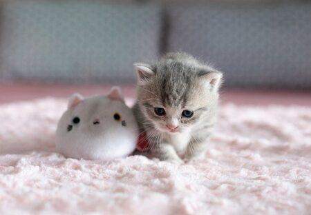 【話題】自分の可愛さを理解している子猫のウインク、あざとすぎるw