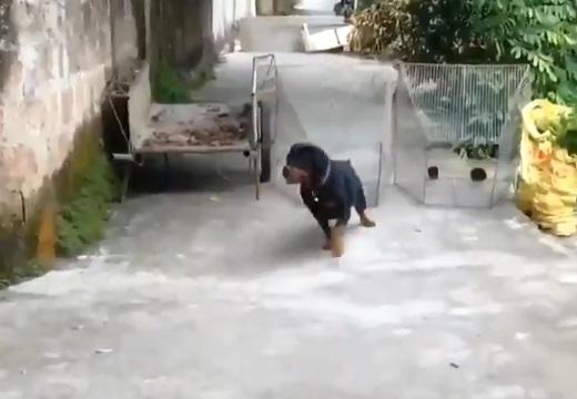 【愛】主人の「help!」が聞こえた犬、ダッシュで駆け付け水に飛び込む