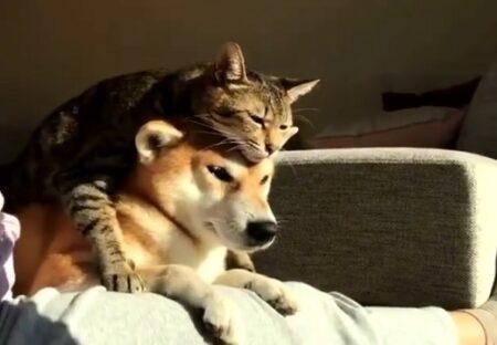 【w】べったり密着して日向ぼっこする犬と猫が話題に「犬の表情がw」