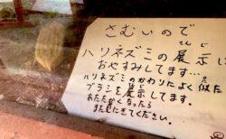 【w】「寒いから‥」ハリネズミの代わりにブラシを展示した飼育員さんが話題に