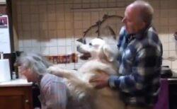 【楽しそう】ばあちゃん・犬・じいちゃん‥泣けるほど素敵な動画が話題に