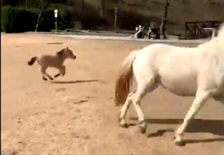 【驚】先週産まれたばかりの子馬、初めて走る様子にネット騒然「撮影者もすごい!」