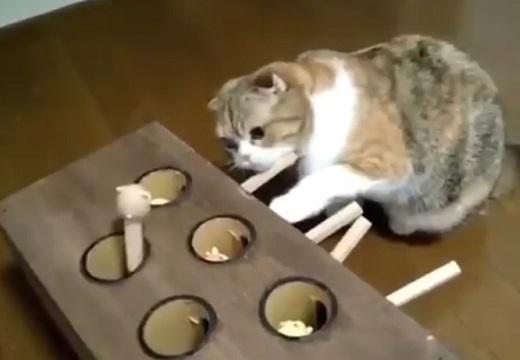【w】おもちゃに真剣な猫と通りすがりの犬、可愛すぎる動画が話題に(・∀・)